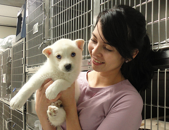 veterinary tech with cute white puppy